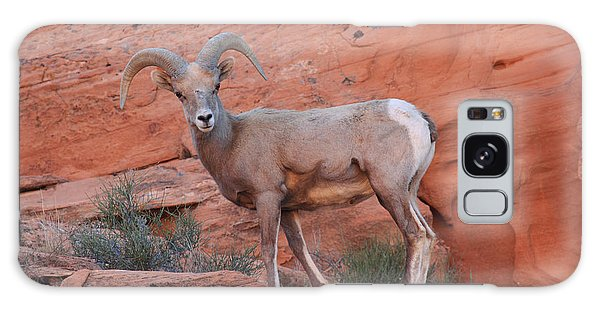 Desert Bighorn Sheep At Nevada's Valley Of Fire Galaxy Case