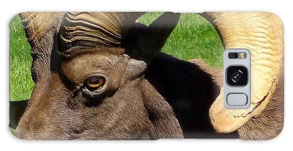 Desert Bighorn Sheep  Galaxy Case