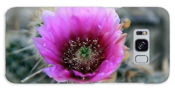 Desert Flower 1 Galaxy Case