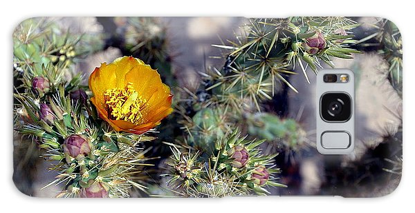 Desert Spring Photo Galaxy Case