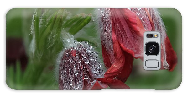 Dew Covered Pasque Flower Galaxy Case by Jane Luxton