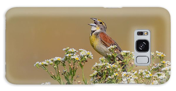 Dickcissel On Wild Daisies Galaxy Case by Daniel Behm