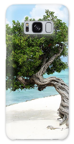 Divi Divi Tree In Aruba Galaxy Case