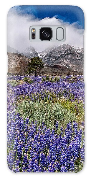 Division Creek Lupine Galaxy Case