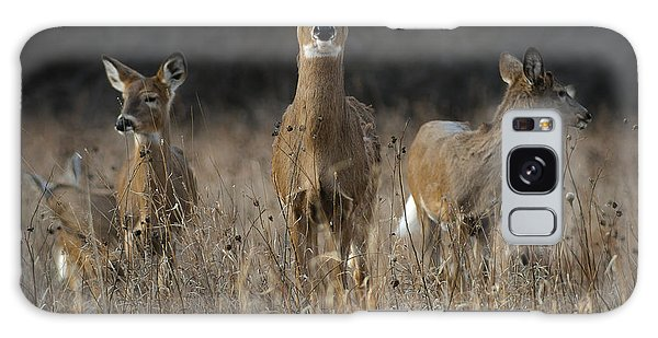 Doe And Yearlings Galaxy Case