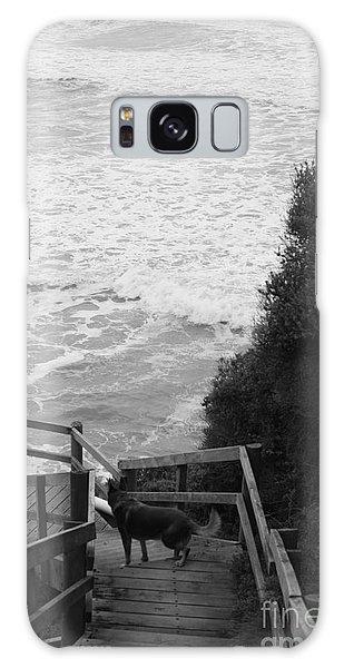 Dog On Sea Stairs Galaxy Case by Amanda Holmes Tzafrir