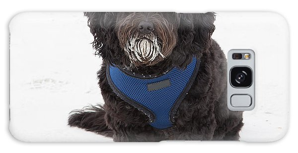 Doggone Good Beach Fun Galaxy Case