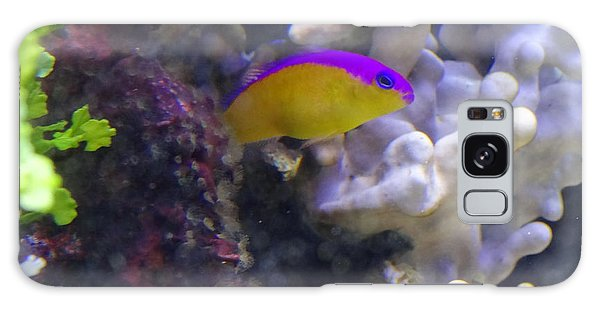 Dottyback After Dinner Galaxy Case