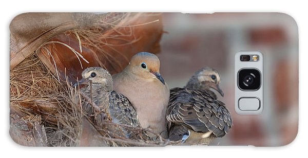 Dove Nest 4 Galaxy Case by Gregory Daley  PPSA