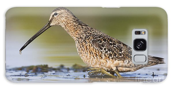 Dowitcher In The Water Galaxy Case
