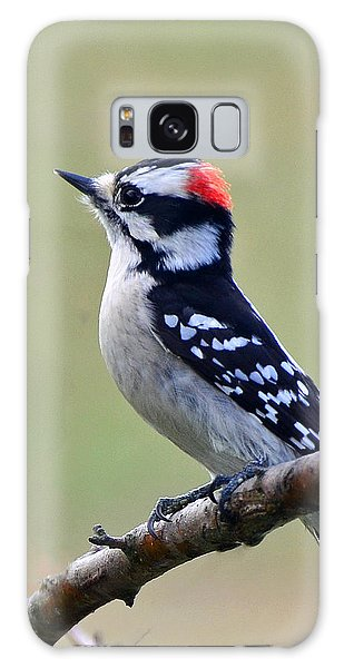 Downy Woodpecker Galaxy Case