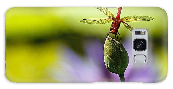 Dragonfly Display Galaxy Case