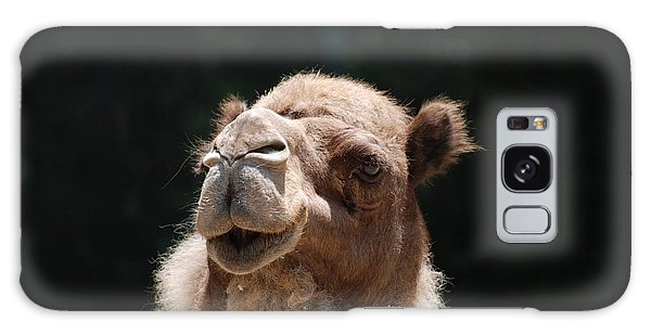 Dromedary Camel Face Galaxy Case