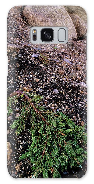 Cairngorms National Park Galaxy Case - Dwarf Juniper by Duncan Shaw/science Photo Library