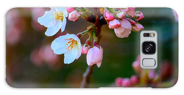 Early Cherry Blossoms Galaxy Case