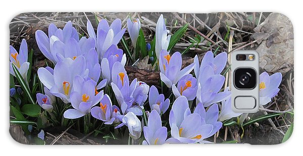 Early Crocuses Galaxy Case by Donald S Hall