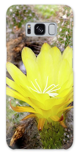 Sea Lily Galaxy Case - Easter Lily Cactus (echinopsis Sp.) by Anthony Cooper/science Photo Library