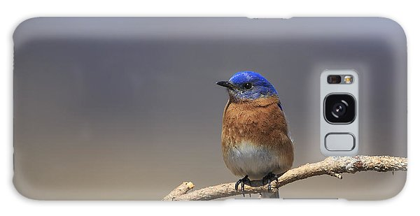 Eastern Bluebird 3 Galaxy Case by Gary Hall