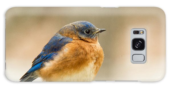 Crossville Galaxy S8 Case - Eastern Bluebird by Douglas Barnett