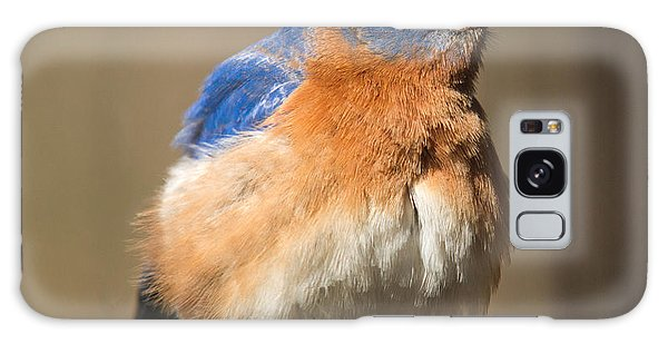 Crossville Galaxy Case - Eastern Bluebird Male Ruffled by Douglas Barnett