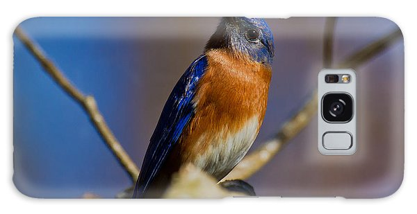 Eastern Bluebird Galaxy Case