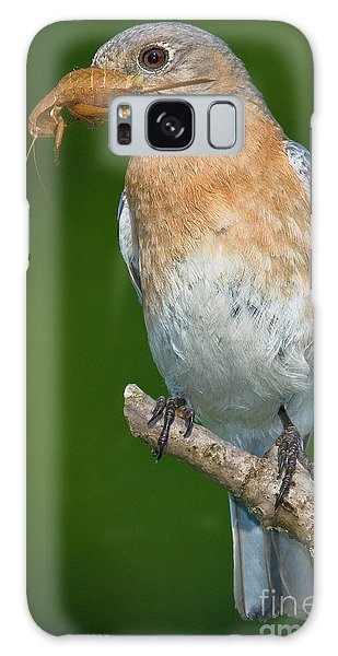 Eastern Bluebird With Katydid Galaxy Case by Jerry Fornarotto
