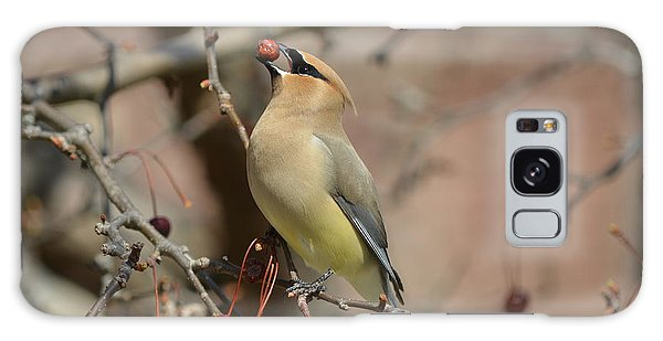 Cedar Waxwing In Winter Galaxy Case