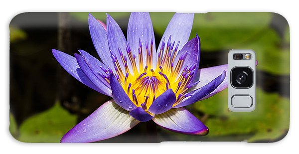 Egyptian Blue Water Lily  Galaxy Case