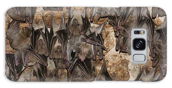 Egyptian Fruit Bat Rousettus Aegyptiacus Galaxy Case