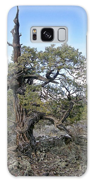 El Malpais Twisted Tree 1 Galaxy Case