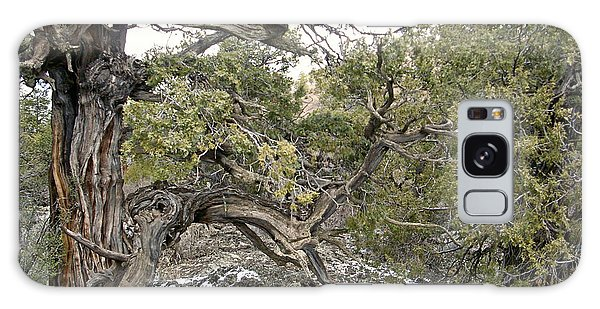 El Malpais Twisted Tree 2 Galaxy Case