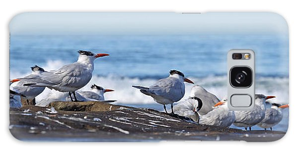 Elegant Terns La Jolla Galaxy Case