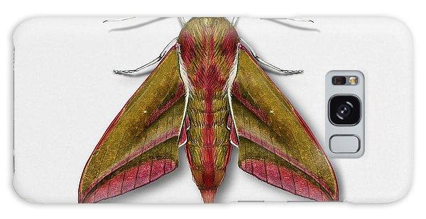 Elephant Hawk Moth Butterfly - Deilephila Elpenor Naturalistic Painting - Nettersheim Eifel Galaxy Case