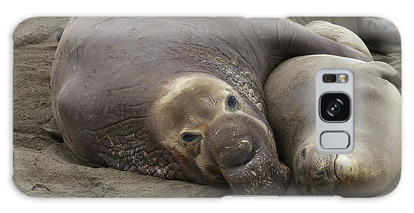 Elephant Seal Couple Galaxy Case by Duncan Selby