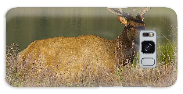 Elk At Dusk Galaxy Case