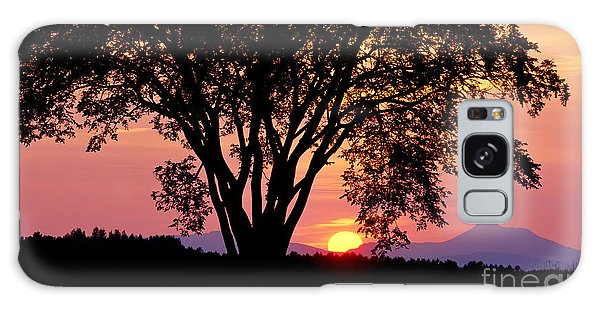 Elm At Sunset Galaxy Case by Alan L Graham