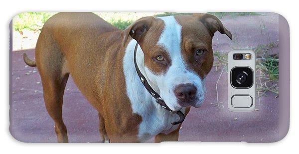 Emma The Pitbull Dog Galaxy Case