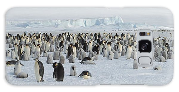 Emperor Penguins Aptenodytes Forsteri Galaxy Case by Panoramic Images