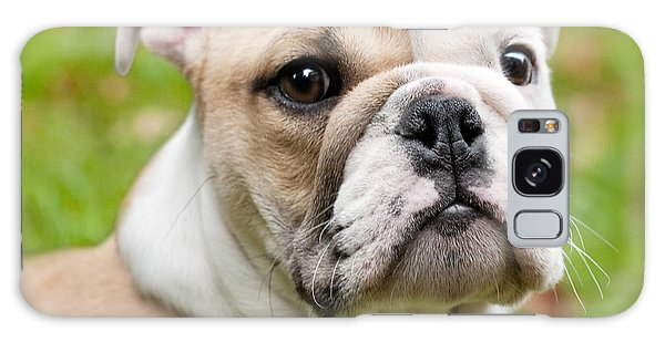 English Bulldog Puppy Galaxy Case by Natalie Kinnear