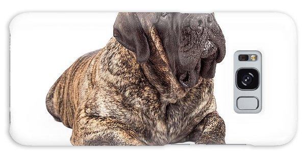 English Mastiff Dog Laying Head Tilted Galaxy Case