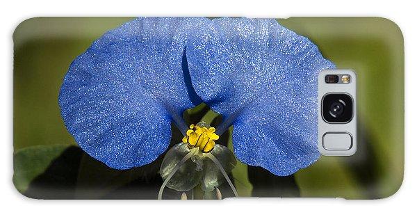 Erect Dayflower  Commelina Erecta Dsmf096 Galaxy Case