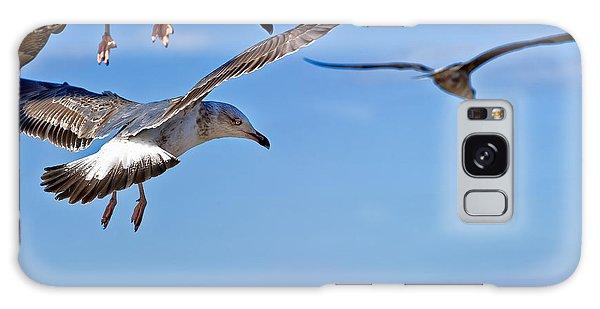 Essaouira Seagull Galaxy Case