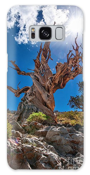 Old Galaxy Case - Eternity - Dramatic View Of The Ancient Bristlecone Pine Tree With Sun Burst. by Jamie Pham