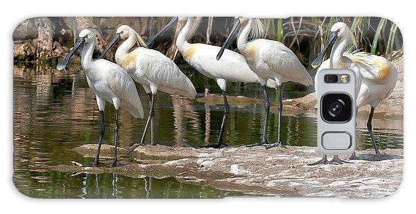Eurasian Spoonbills At Water's Edge Galaxy S8 Case