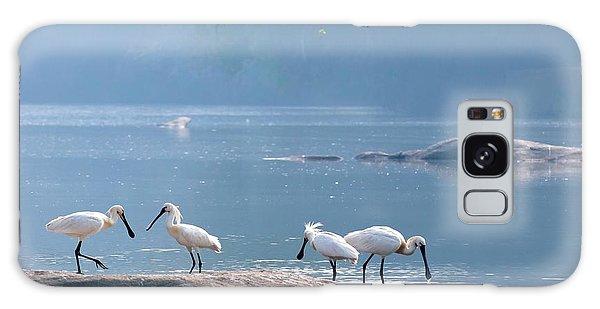 Eurasian Spoonbills Feeding Galaxy S8 Case