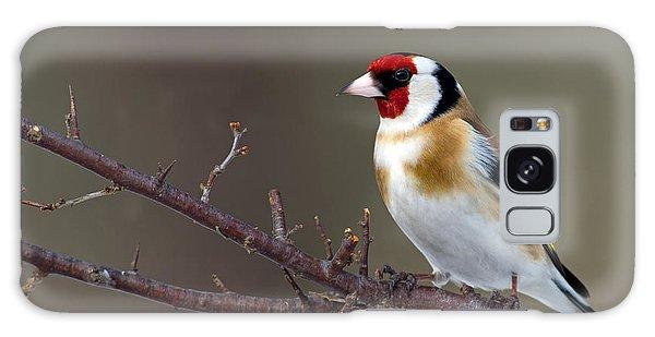 European Goldfinch  Galaxy Case