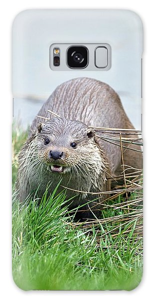 Otter Galaxy Case - European Otter by Gustoimages/science Photo Library