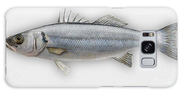 European Seabass Dicentrarchus Labrax - Bar Commun - Loup De Mer - Lubina - Havabor - Seafood Art Galaxy Case
