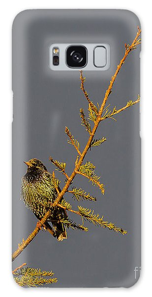 European Starling Galaxy Case