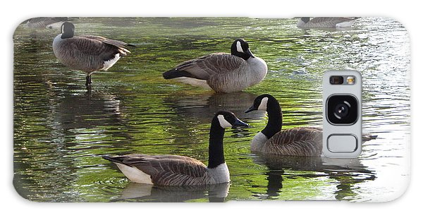 Evening Geese Gathering Galaxy Case